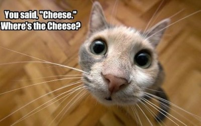 cheese-lolcat