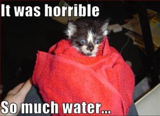 kitten-did-not-like-the-water