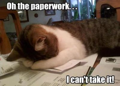 paperwork kitty