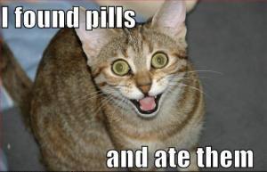 Pill cat